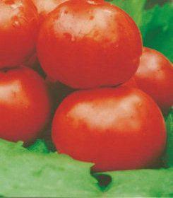 Насіння томатів Колгоспний, фото 2