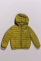 Куртка стеганная оливковая (2-5 лет), фото 1
