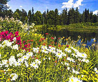 Алмазна Живопис 30*40 GM 73938 Польові квіти