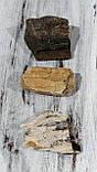 Окаменелое дерево, фото 2
