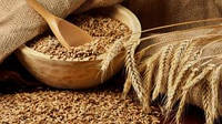 Мировой рынок зерна стремится к равновесию