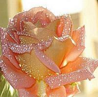 Картина для рисования камнями (стразами) Роза Diamond painting Алмазная вышивка