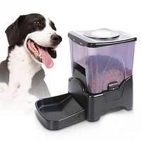 Преимущества автоматических кормушек для собак