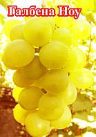 Галбена ноу (ранний) виноград