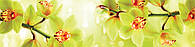 Наклейки кухонный фартук Zatarga Орхидеи тигровые 600х3000 мм Желтый Z180280 2 MN, КОД: 1927037