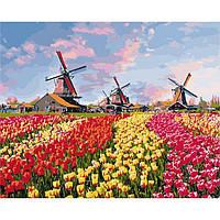 Картина по номерах Сільський пейзаж Барвисті тюльпани Голландії 40*50 см