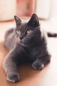 Как подобрать шампунь для котов по типу шерсти