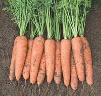 "Семена моркови  ""Кардифф"" F1   1 000 000 сем. Бейо  (Bejo)"