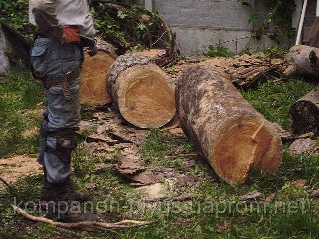 Спиливание деревьев Спиливание дерева Киев