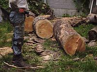 Спиливание деревьев Спиливание дерева Киев, фото 1