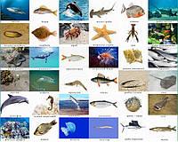 Карточки. Мешканці вод. Риби . 27 шт.