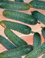 Семена Огурец самоопыляющийся Меренга F1, 250 семян Seminis