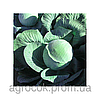 Семена капусты белокочанной поздней Галакси F1, Seminis (Нидерланды), 2500 семян