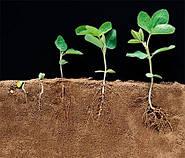 Азот в жизни растений.