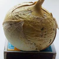 Слоновий чеснок гигант Рокамболь Кипрский вкусный очень полезный лечебный сорт, однозубка упаковка от 1шт, фото 1