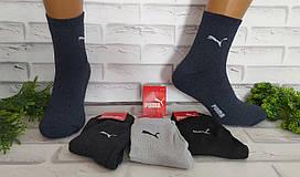 Носки мужские махровые р. 40-44 спортивные средняя длина за 1 пару 0105P1
