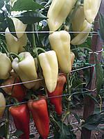 Немезіс F1 Nemezis насіння перцю білого конусовидного (500 шт)