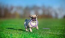 Пуллер Микро - тренировочный снаряд для собак мелких пород, фото 3