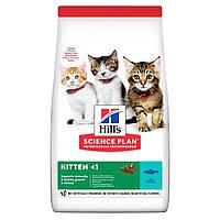 Сухой корм HILL`S (Хилс) Kitten Tuna для котят и беременных и кормящих кошек тунец 0.3 кг