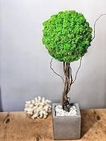 """Стабілізоване дерево у бетонному кашпо """"КУБ"""" h45 см, фото 1"""
