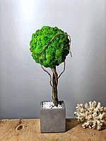 """Стабілізована дерево у бетонній кашпо """"КУБ"""" h-35 см"""