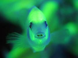 Люминофорный порошок, светящаяся краска, светонакопительные пигменты
