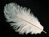 Перо страуса Біле . Розмір 15-20см