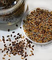 Пророщенное зерно - уникальный источник витаминов и минералов
