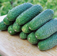 ЧАЙКОВСЬКИЙ F1 - насіння огірка, Rijk Zwaan 250 насінин