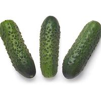 СОНАТА F1 - насіння огірка, Rijk Zwaan 10 грам