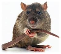 Защита от грызунов, мышей и крыс