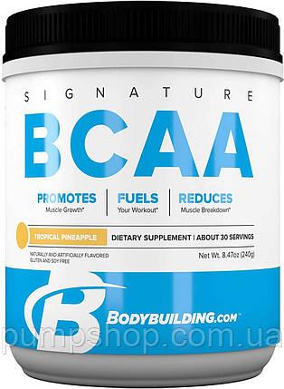 Амінокислоти Bodybuilding Signature BCAA 3:1:1 240 г (30 порц.), фото 2