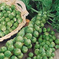 Геркулес семена капусты брюссельской (Euroseed, Италия)
