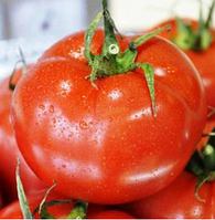 АЙВЕНГО F1 - семена томата индетерминантного, 1 000 семян, Rijk Zwaan, фото 1