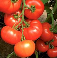 КЛАРАБЕЛЛА F1 - семена томата индетерминантного, 1 000 семян, Rijk Zwaan, фото 1