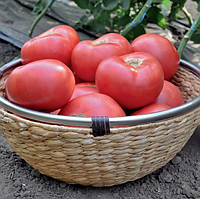 ЭСМИРА F1 - семена томата индетерминантного, 1 000 семян, Rijk Zwaan, фото 1
