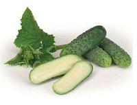 ДИРИГЕНТ F1 - насіння огірка партенокарпічного, 1 000 насінин, Rijk Zwaan, фото 1