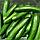 МЕРТУС F1 - насіння огірка партенокарпічного, 1 000 насінин, Rijk Zwaan, фото 2
