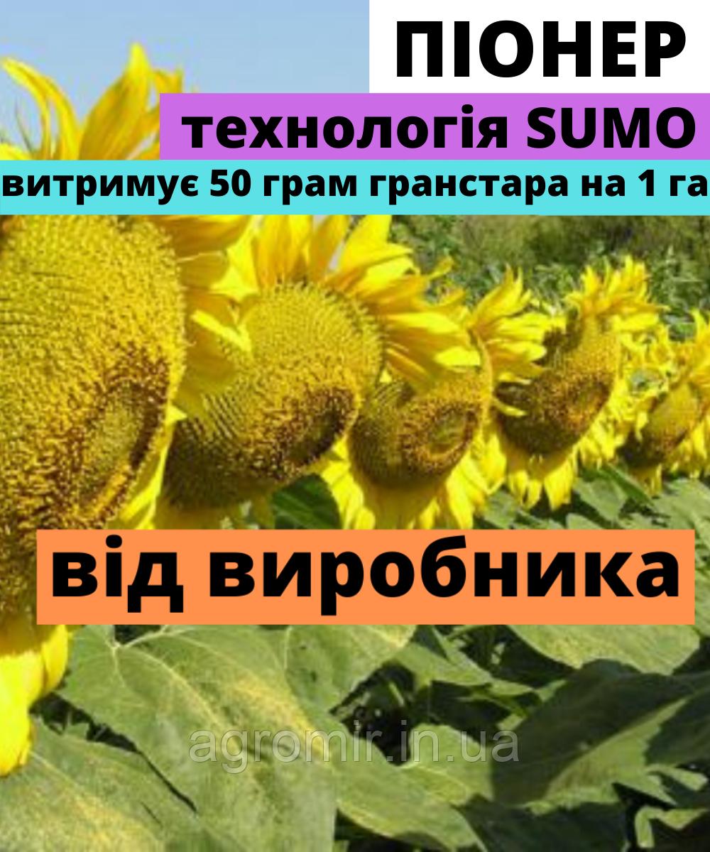 Семена подсолнечника Пионер F1 от АФ НПП АГРОМИР