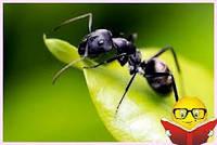 Препарати від мурах