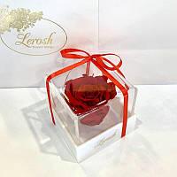 Красный стабилизированный бутон розы в подарочной коробке Lerosh - Classic