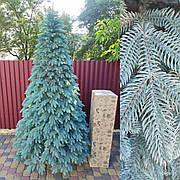 Швейцарская голубая 2.1м литая елка искусственная ели литые