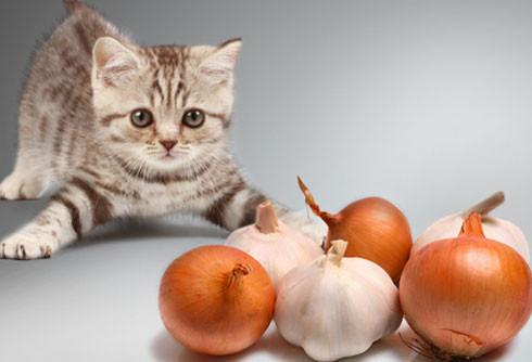 Витамины и лакомства для кошек