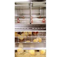 Комплект оборудования для клеточного содержания промышленного стада кур