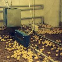 Комплект оборудования для напольного выращивания и содержания птицы