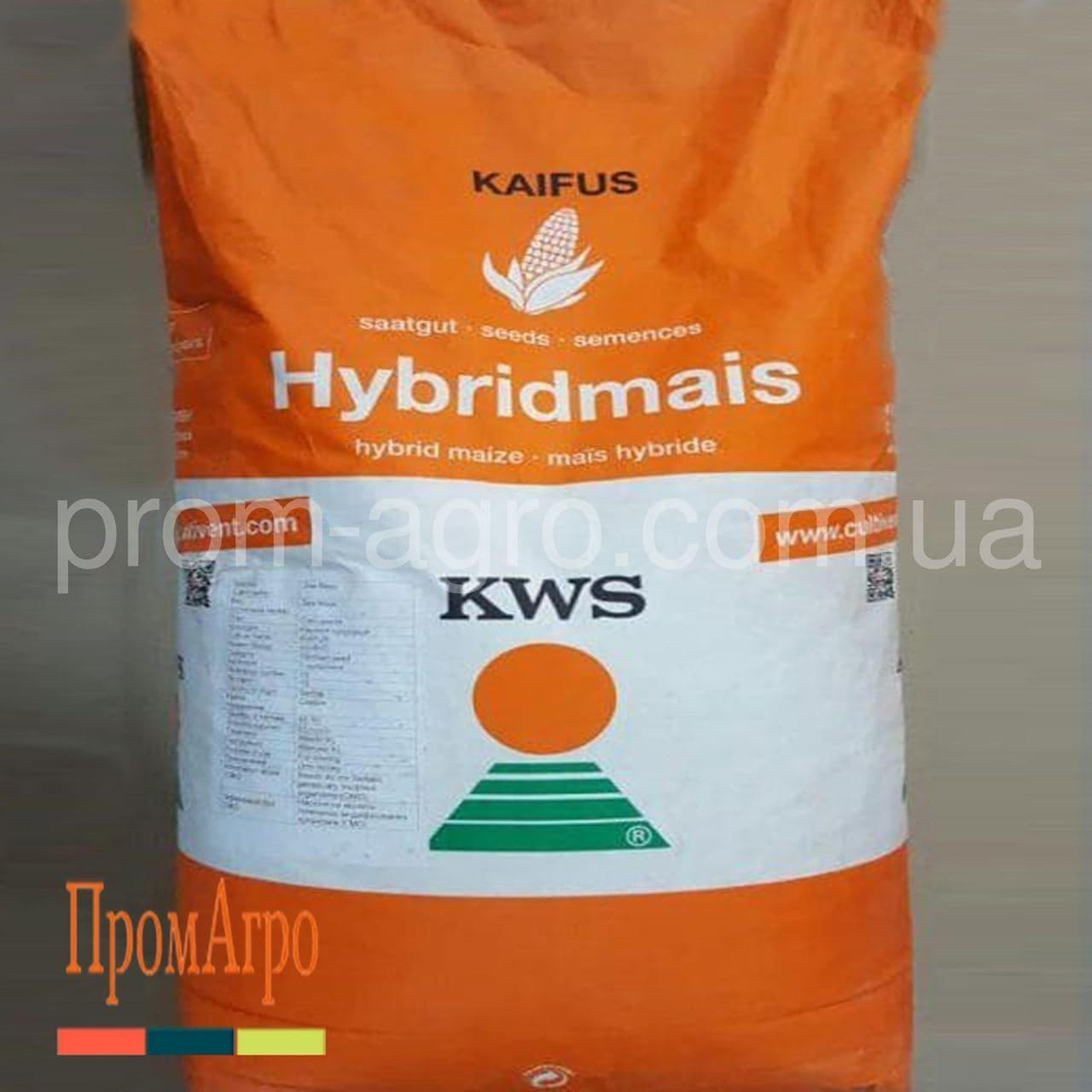 Семена кукурузы KWS Карифолс ФАО 380 посевной гибрид кукурузы КВС Карифолс