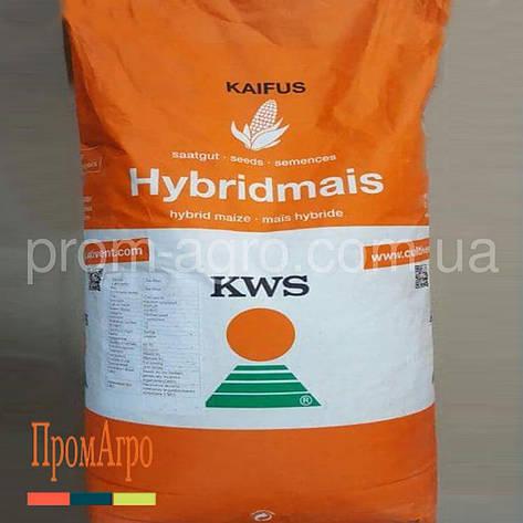 Семена кукурузы KWS Карифолс ФАО 380 посевной гибрид кукурузы КВС Карифолс, фото 2