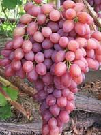 Кишмиш лучистый-виноград (среднеранний)