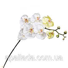 Біла орхідея 137 см