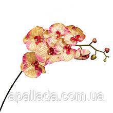 Орхідея золотиста 137 см